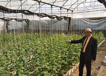 زراعة بنها تطرح بشائر إنتاجها من الخضروات للمواطنين بسعر التكلفة