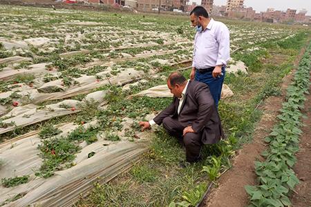 جامعة بنها تنظم قافلة لرصد الملوثات البيئية بقرية الدير بطوخ