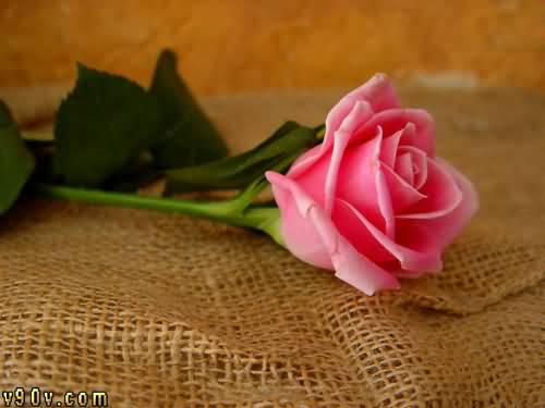 Fatma Salah Eldeen Refaat Mohamed Nasr